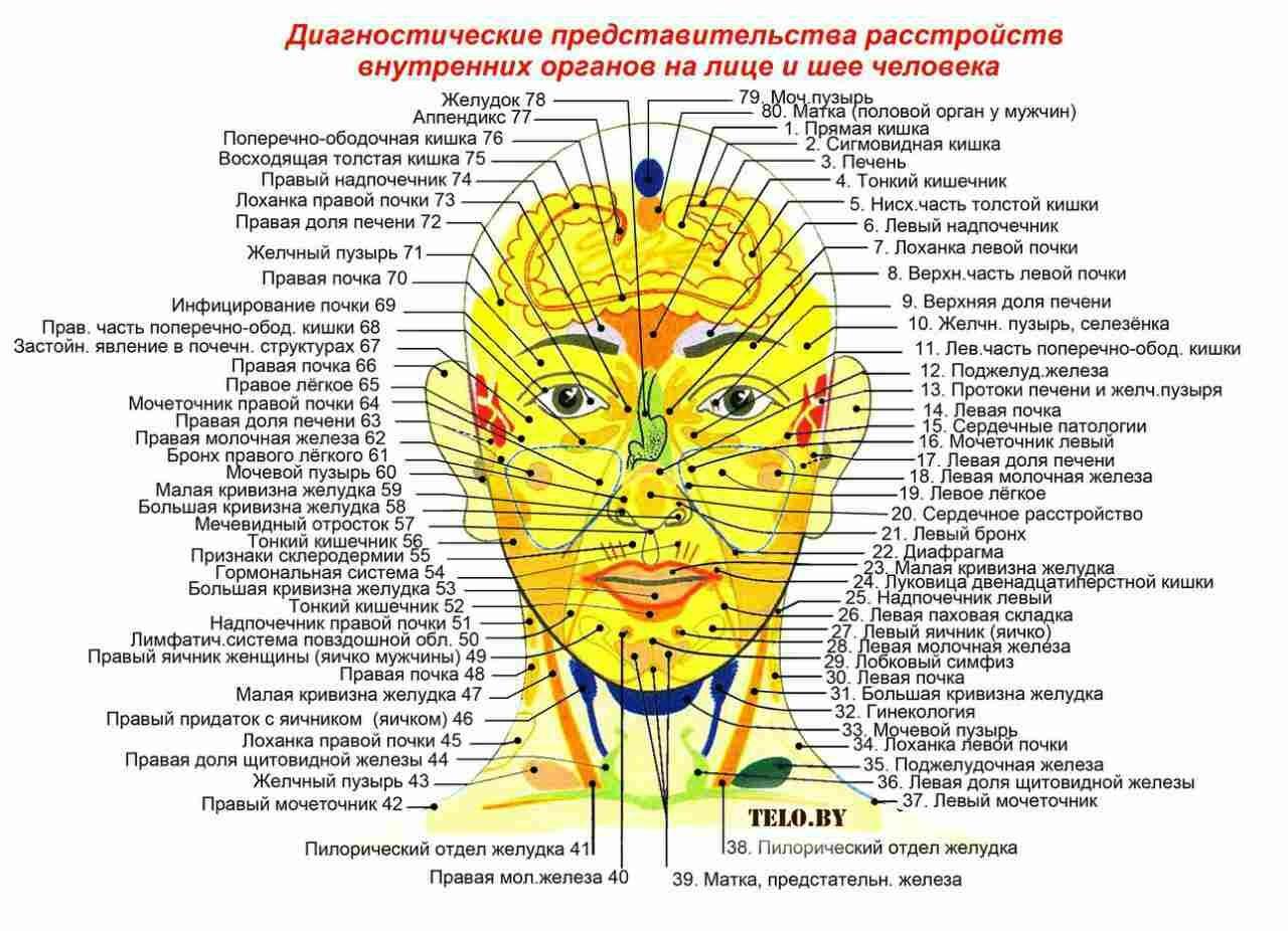 Схема внутренних органов на лице человека